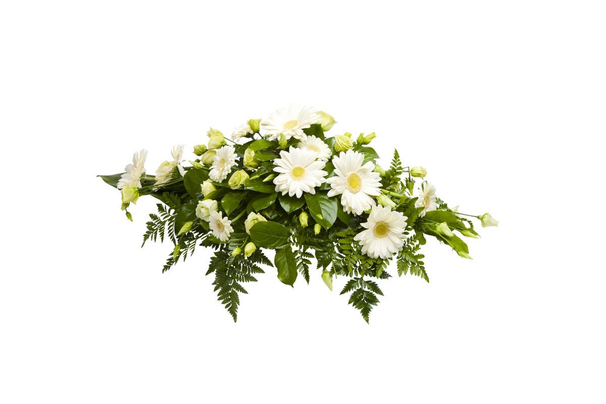 Arkkulaite Gerbera, hautajaiskukat No 2